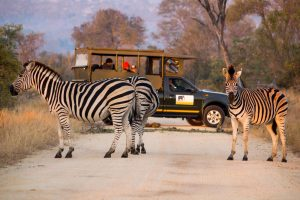 private-kruger-safaris-5