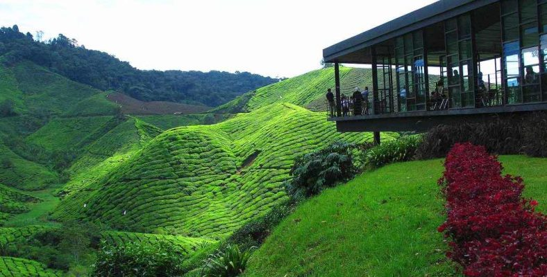 malaezia cameron highlands 2