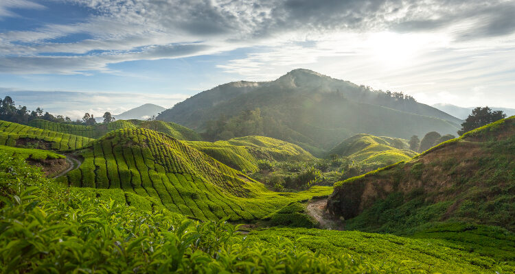 malaezia cameron highlands