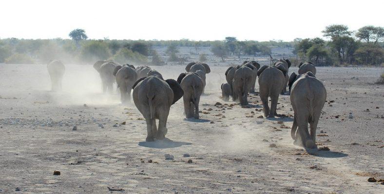 etosha national park namibia 3