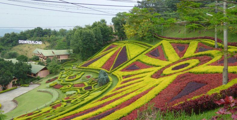 doi mae salong Thailand 3