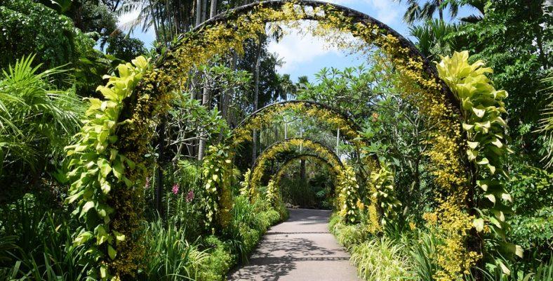 singapore 9 botanical garden