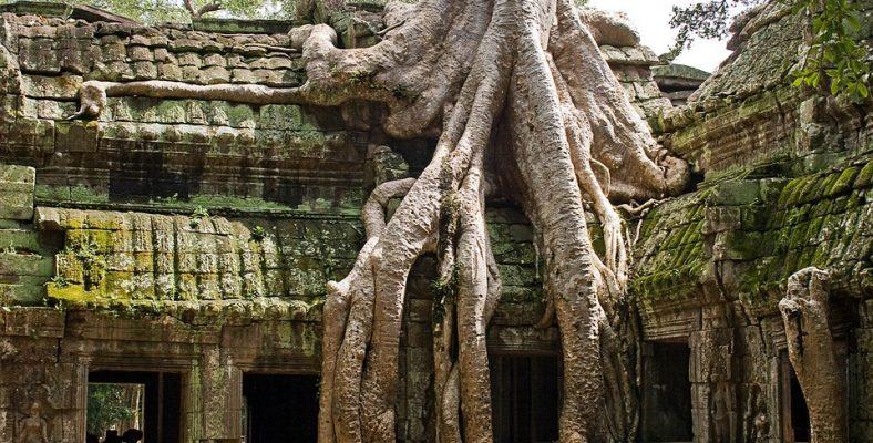 ta prohm cambodia 2