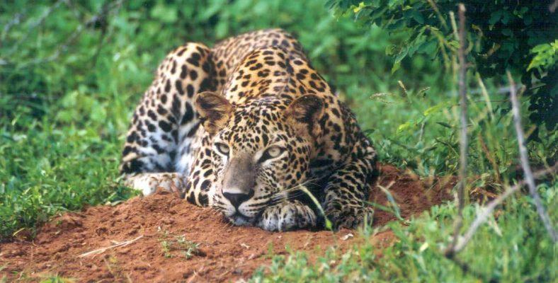 Parcul National Udawalawe