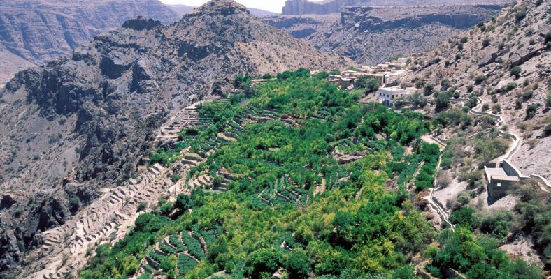 Jabal Al Akhdar (the green mountain)