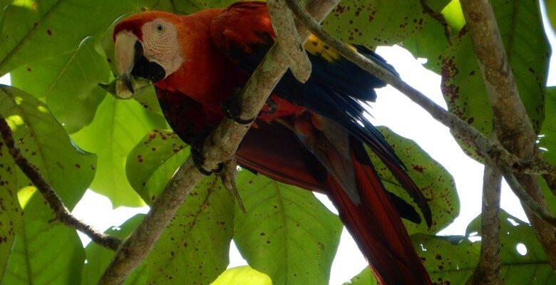 Costa Rica 1