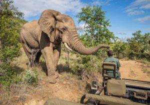 safari_in_mkzuze_falls_0