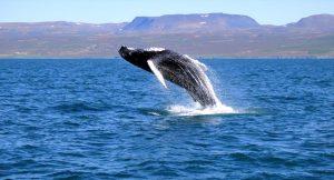 whale-001
