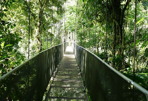 arenal hanging bridges 2