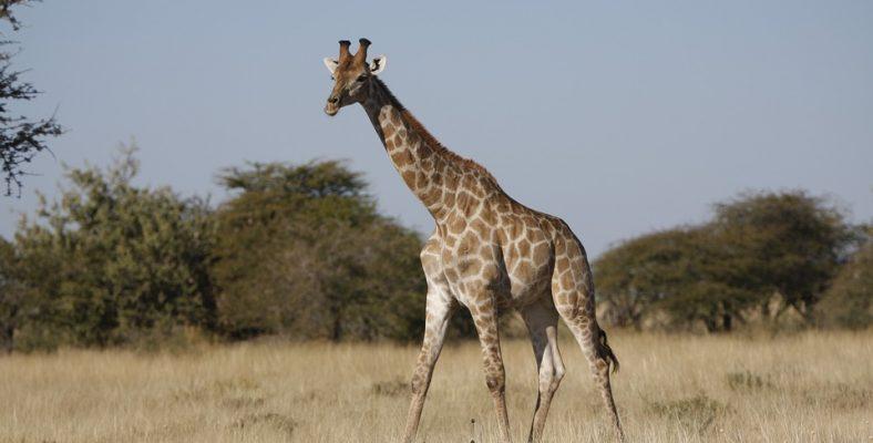 etosha national park namibia 2