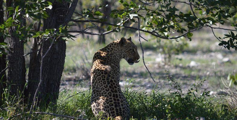 etosha national park namibia 4