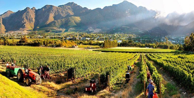 Franschhoek wineland