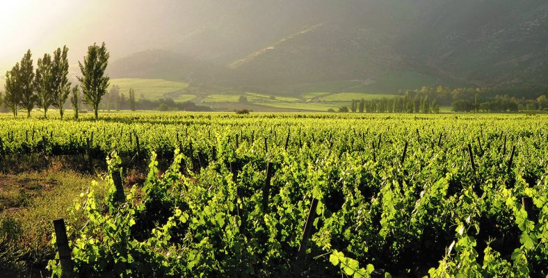 Khao Yai winery 2