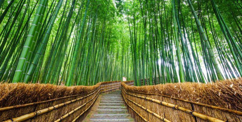 Kyoto Sangano Bamboo Grove