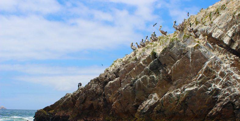 ballestas islands pelicans