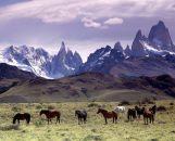 patagonia resizes