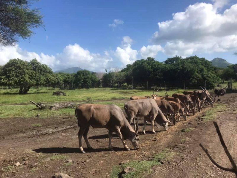 testimonial mauritius 8 mada