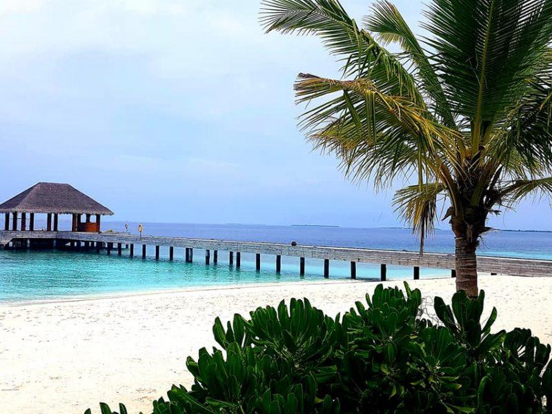 Maldive_testimonial